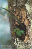 Costa Rica - Le Bel Oiseau Sort De Son Nid  (très Belle Carte Avec 3 Timbres) - Costa Rica
