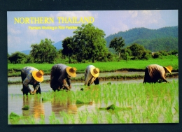 THAILAND  -  Working In Rice Paddy  Unused Postcard - Thailand