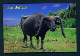 THAILAND  -  Thai Buffalo  Unused Postcard - Thailand