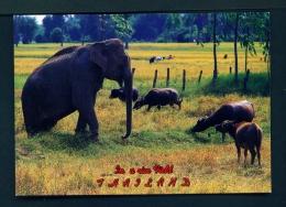 THAILAND  -  Surin  Animals Grazing In A Rice Field  Unused Postcard - Thailand