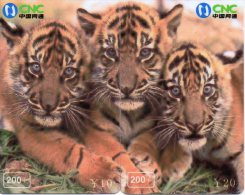 Tigre Animal Félin Télécarte  Phonecard  Telefonkarte P59 - Puzzles
