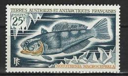 "TAAF YT 37 "" Poissons "" 1971 Neuf** - Terres Australes Et Antarctiques Françaises (TAAF)"