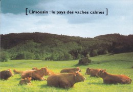 87---VACHES LIMOUSINES AU PRE---voir 2  Scans - France