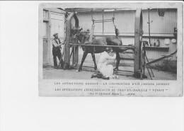 CAUDEBEC EN CAUX  CASTRATION DES CHEVAUX - France