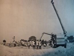 Battage Du Riz Au Soudan , Héliogravure De 1952 - Documenti Storici
