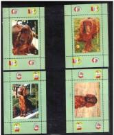 DOG IRISH SETTER 8 S/SHEETS CINDERELLA - Chiens