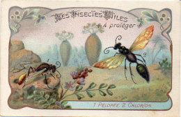 Les Insectes Utiles A Protéger - 1 - Péopée - 2 - Chlorion   - Ordre De Hymenoptères       (84768) - Autres