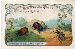 Les Insectes Utiles A Protéger - 1 - Onthophage - 2 - Hister Sinué - 3 - Réduve   - Ordre Des Coléoptères (84772) - Autres