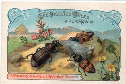 Les Insectes Utiles A Protéger-1- Nécrophore Germanique -2- Nécrophore Fossoyeur-Ordre Des Coléoptères(84773) - Autres