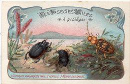 Les Insectes Utiles A Protéger-1- Géotrupe Phalangist Mâle  -2- Femelle - Nébrié - Ordre Des Coléoptères(84774) - Autres