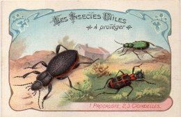 Les Insectes Utiles A Protége -1- Procruste -2- 3 - Cicindelles - Ordre Des Coléoptères(84777) - Autres