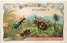 Les Insectes Utiles A Protége -1- Cicindèle Au Long Cou -2-Omophron- Tanasimus  - Ordre Des Coléoptères(84778) - Autres