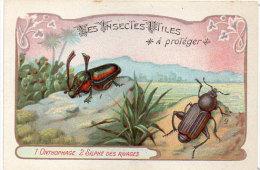 Les Insectes Utiles A Protége -1- Onthophage - 2 - Silphe Des Rivages  - Ordre Des Coléoptères (84781) - Autres