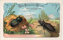 Les Insectes Utiles A Protége - Géotrupe Changeant - 2 Blaps  -  Ordre Des Coléoptères (84784) - Autres