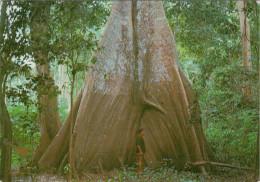 MANAUS  AM    SAMAUMEIRA        (VIAGGIATA) - Manaus