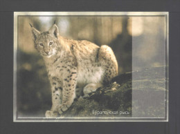 Belarus 2000. Postcard. Wild Cat Lynx Fauna - Belarus