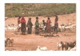 CPSM DJIBOUTI  Point D'Eau Femmes Enfants Avec Des Chèvres - Gibuti