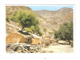CPSM DJIBOUTI  Sur La Route De Bankuale - Gibuti