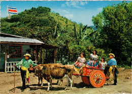 COSTA RICA  PAISAJE  TIPICO FOLKLORIC  OXCART      (VIAGGIATA) - Costa Rica