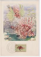 Carte Maximum, Poissons, Plasmarine, Publicité, 1955, Poisson Feu D´artifice, Timbre, Mozambique, Mocambique. - Mozambique