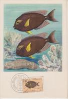 Carte Maximum, Poissons, Plasmarine, Publicité, 1955, Poisson Chirurgien , Timbre,  Mocambique, Teuthis - Mozambique
