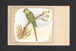 ANIMALS - ANIMAUX - OISEAUX - Halsbandparkiet - Perruche à Collier Rose - Indian Ring-necked Parrakeet - PAR P. SLUIS - Oiseaux