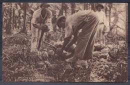 TRINIDAD ,  OLD  POSTCARD - Postcards