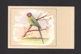ANIMALS - ANIMAUX - OISEAUX - Pruimkopparkiet - Perruche Tête De Prune - Plumheaded Parrakeet - Palaeornis  PAR P. SLUIS - Oiseaux