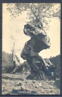 1923 , TARJETA POSTAL CIRCULADA DESDE PALMA DE MALLORCA , ÁRBOLES , OLIVOS CENTENARIOS. - Árboles