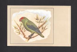 ANIMALS - ANIMAUX - OISEAUX - BIRDS - AGAPORNIS TARENTA - LOVE BIRD -  PAR P. SLUIS - Oiseaux