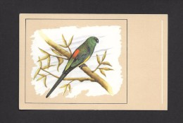 ANIMALS - ANIMAUX - OISEAUX - Roodrugparkiet - Perruche à Croupion Rouge - Redrumped Parakeet - Psephotus  PAR P. SLUIS - Oiseaux