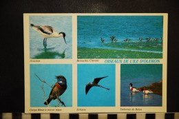 CP, 17, ILe D'OLERON, Oiseaux, Animaux , Avocette, Gorge Bleue, Tadornes, Bernaches Cravant - Ile D'Oléron
