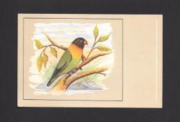 ANIMALS - ANIMAUX - OISEAUX - BIRDS - MASKED LOVEBIRD - AGAPORNIS PERSONATA - SCHWARZKOPFCHEN -  PAR P. SLUIS - Oiseaux