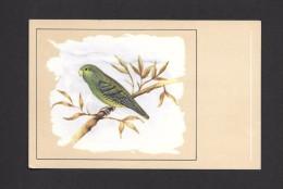 ANIMALS - ANIMAUX - OISEAUX - BIRDS - BOLBORHYNCHUS LINEOLA - LINEOLATED PARAKEET - PERRUCHE CATTHÉRINE  -  PAR P. SLUIS - Oiseaux