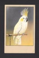 ANIMALS - ANIMAUX - OISEAUX - BIRDS -  Cacatoë Huppe Jaune Plictolophus Sulphurea Yellow Crested Cockatoo - PAR P. SLUIS - Oiseaux