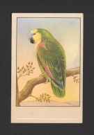ANIMALS - ANIMAUX - OISEAUX - BIRDS -  Amazone à Front Bleu. (Psittacidae - Perroquet) - Amazona Aestiva - PAR P. SLUIS - Oiseaux