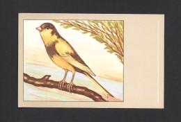 ANIMALS - ANIMAUX - OISEAUX - BIRDS - CANARI PANACHÉ - CANARY VARIEGATED - SERINUS CANARIUS - PAR P. SLUIS - Oiseaux