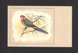 ANIMALS - ANIMAUX - OISEAUX - BIRDS - Rosella Perruche Omnicolore Roselle  - PAR P. SLUIS - Oiseaux