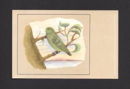 ANIMALS - ANIMAUX - OISEAUX - BIRDS - GUIANA PARROTLET - PERRUCHE MOINEAU À CUL VERT  - PAR P. SLUIS - Oiseaux