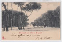 Beyrouth-promenade Des Pins  -veduta  -1902 - Liban