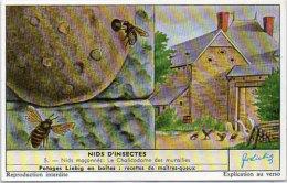 LIEBIG - Nids D' Insectes -   5 - Nids Façonnés : Le Chalicodome Des Murailles    (84802) - Afiches