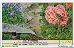 LIEBIG - Nids D' Insectes -   6 - Nids Aménagés : Le Mégachile Du Rosier     (84803) - Affiches