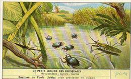 LIEBIG - Le Petit Monde Des Ruisseaux - 1 - Hydrometre - Gyrins - Gerris    (84804) - Afiches