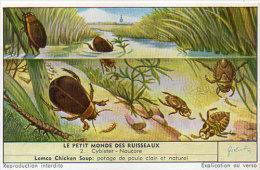 LIEBIG - Le Petit Monde Des Ruisseaux - 2 - Cybister - Naucore     (84805) - Affiches
