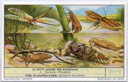 LIEBIG - Le Petit Monde Des Ruisseaux - 4 - Cordulie - Phtygane       (84807) - Affiches