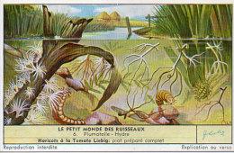 LIEBIG - Le Petit Monde Des Ruisseaux - 6 - Plumatelle - Hydre    (84809) - Afiches