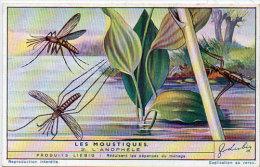 LIEBIG - Les Moustiques - 2 - L' Anophèle    (84811) - Afiches