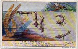 LIEBIG - Les Moustiques - Les Oeufs Et Les Larves    (84812) - Afiches