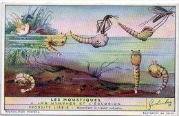 LIEBIG - Les Moustiques - 4 - Les Nymphes Et L' Eclosion     (84813) - Affiches