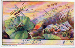 LIEBIG - Les Moustiques - La Stégomie   (84814) - Afiches